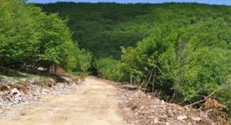 Δασάρχης-Καβάλας:-Προβλήματα-στους-δασικούς-δρόμους-Χρειάζεται-προσοχή