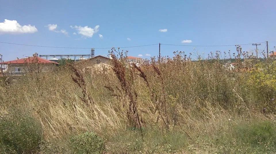 Δήμος-Αλεξανδρούπολης:-Υποχρέωση-των-πολιτών-ο-καθαρισμός-οικοπέδων-και-ακάλυπτων-χώρων